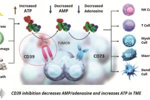 医治胃癌CD39抑制剂/Keytruda组合疗法行将进入临床