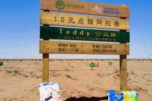 携手中国绿化基金会 泰迪熊植树节公益活动即将再度上线